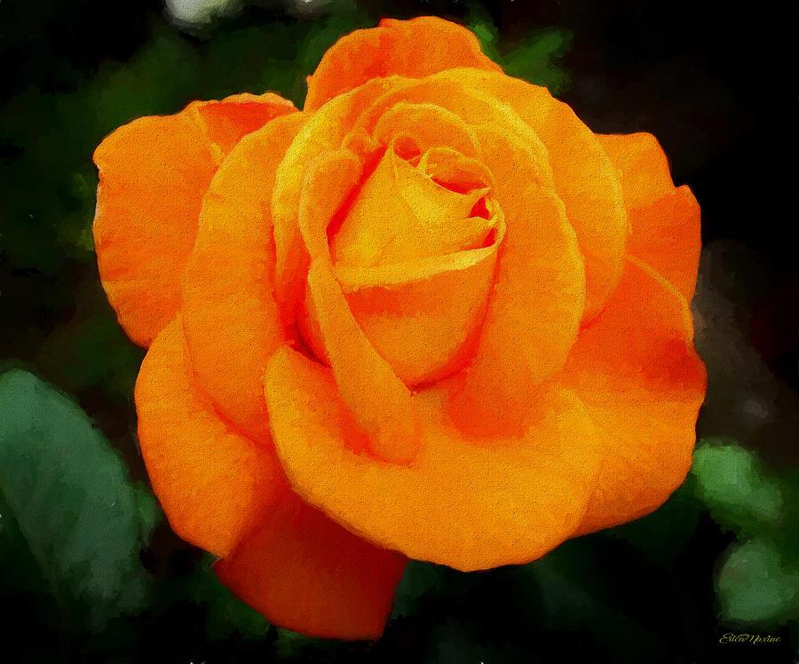 Orange Rose 971 - Painting by Ericamaxine Price