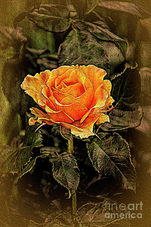 Orange Rose In Oils Photograph