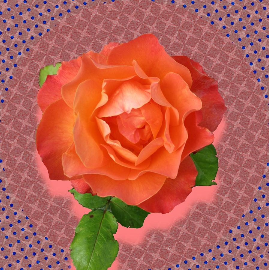 Orange Rose by Wilma Barnwell