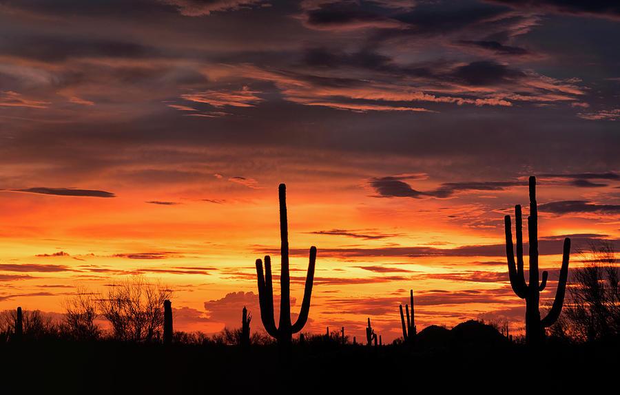 Saguaro Sunset Photograph - Orange Sherbert Silhouette Sunset  by Saija Lehtonen