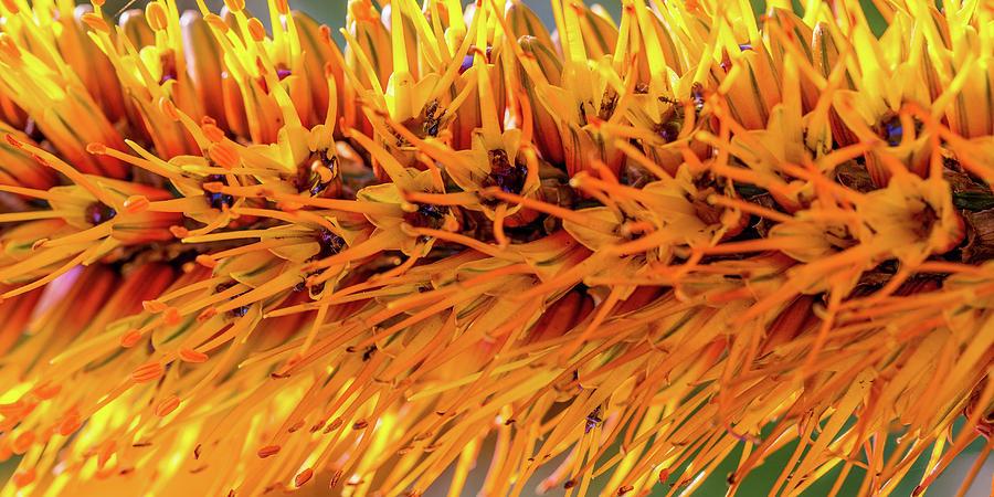 Orange Stamens by Mark Shoolery