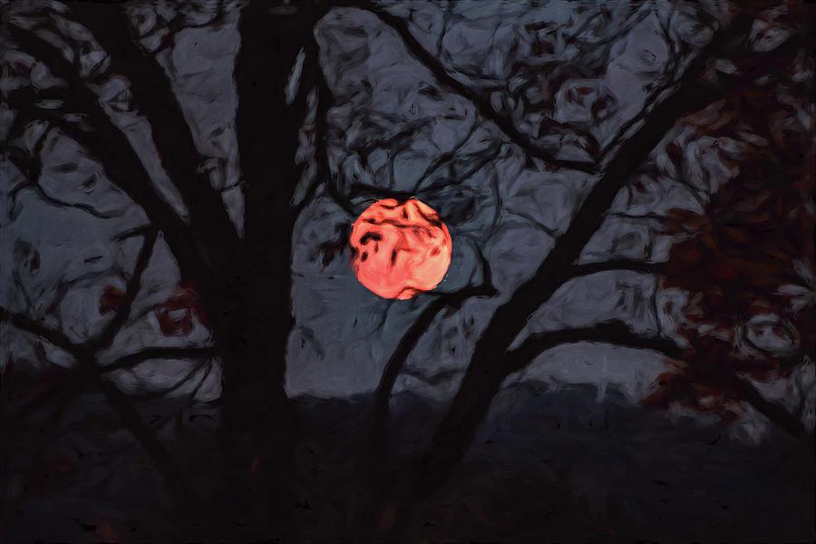 Orange Tree by Davin McLaird