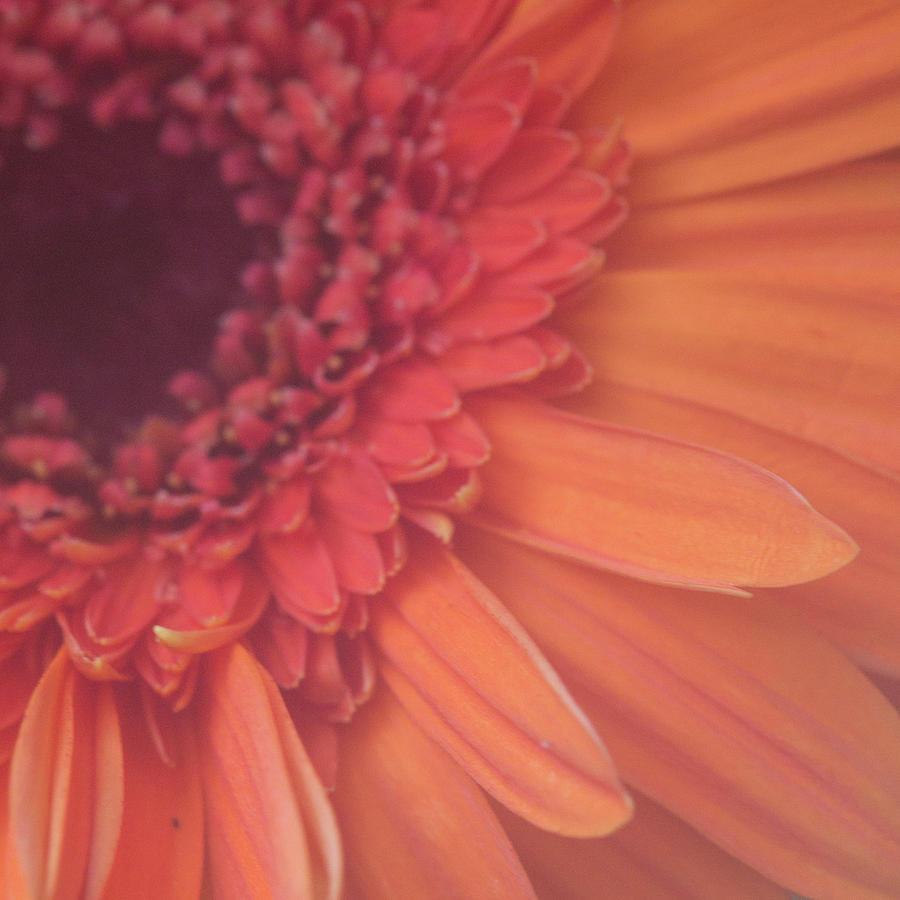 Orange Up Close by Karen Kuykendall