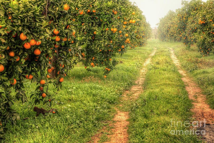 Orange Way Photograph by Zu Sanchez Photography