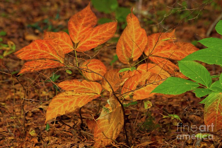 Nature Photograph - Orange Yellow And Green by Sharon Mayhak