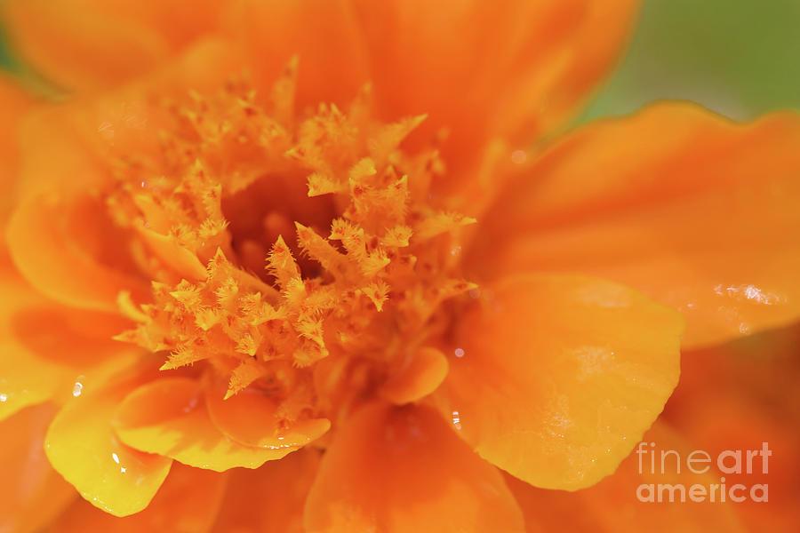 Orange You Happy by Karen Adams