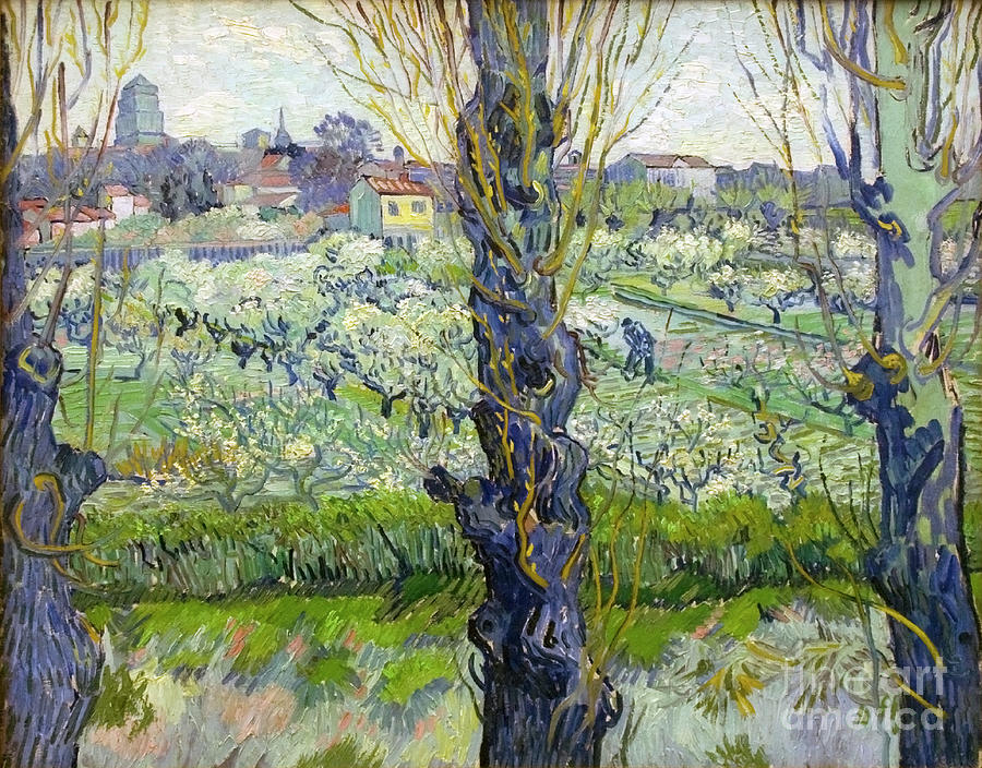 Orchard In Blossom With View Of Arles Drawing by Heritage Images