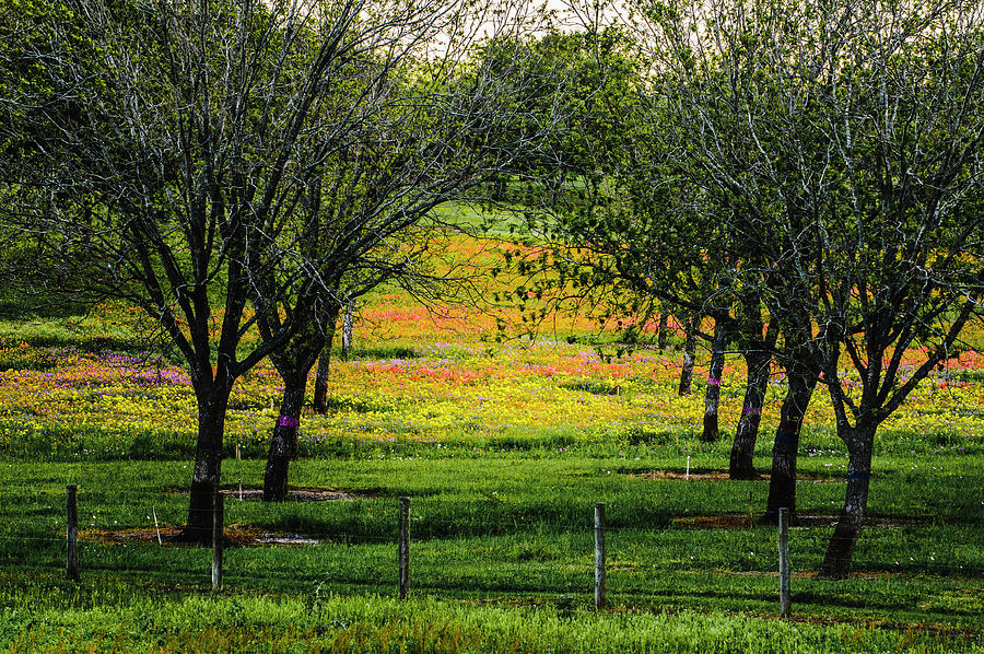 Orchard of Colors by Johnny Boyd