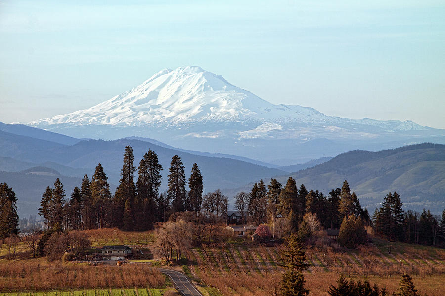 Orchards In Oregon With Mt Adams In Photograph by Lynn Suckow Photography