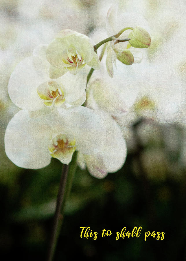 Orchid 2 by Rosette Doyle