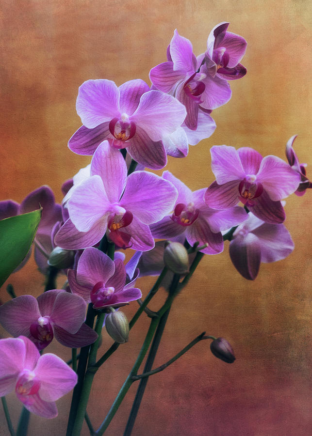 Orchid 3 by Rosette Doyle