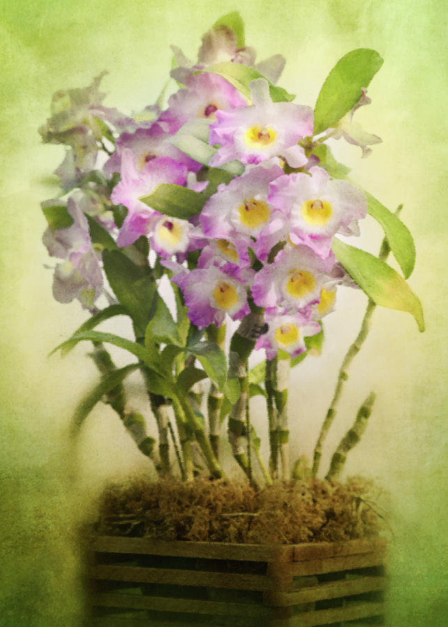 Orchid 9 by Rosette Doyle