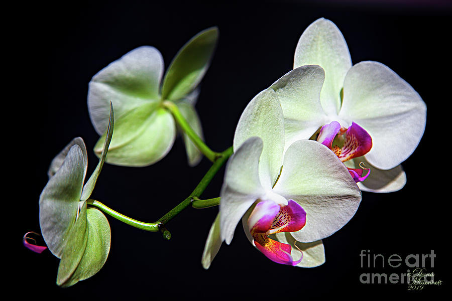 Orchid Art, Floral Art, Floral Home Decor, floral phone case, by David Millenheft