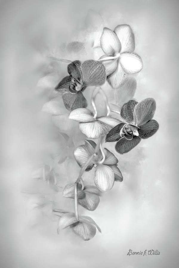 orchid by Bonnie Willis