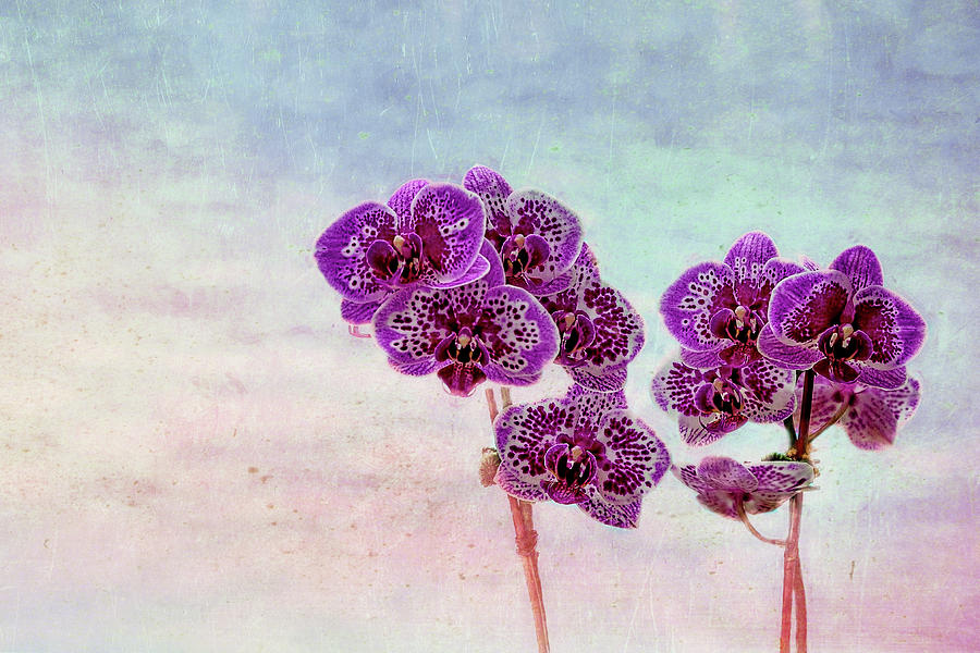 Orchid Bouquet by Kay Brewer