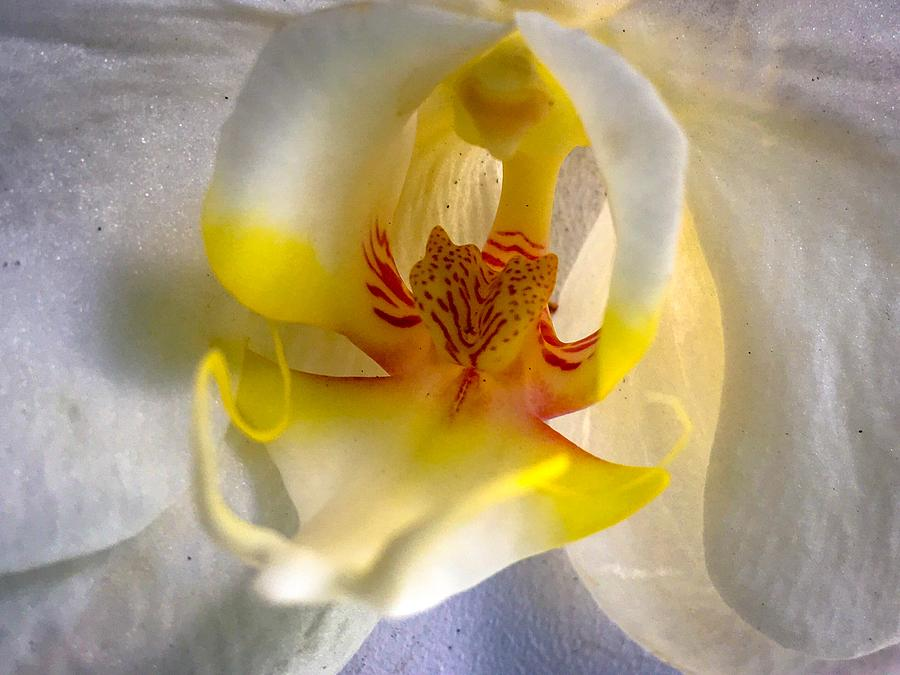 Orchid Close-up Photograph