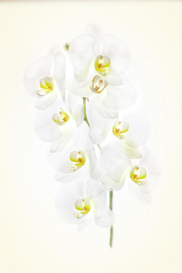Orchid display by Usha Peddamatham
