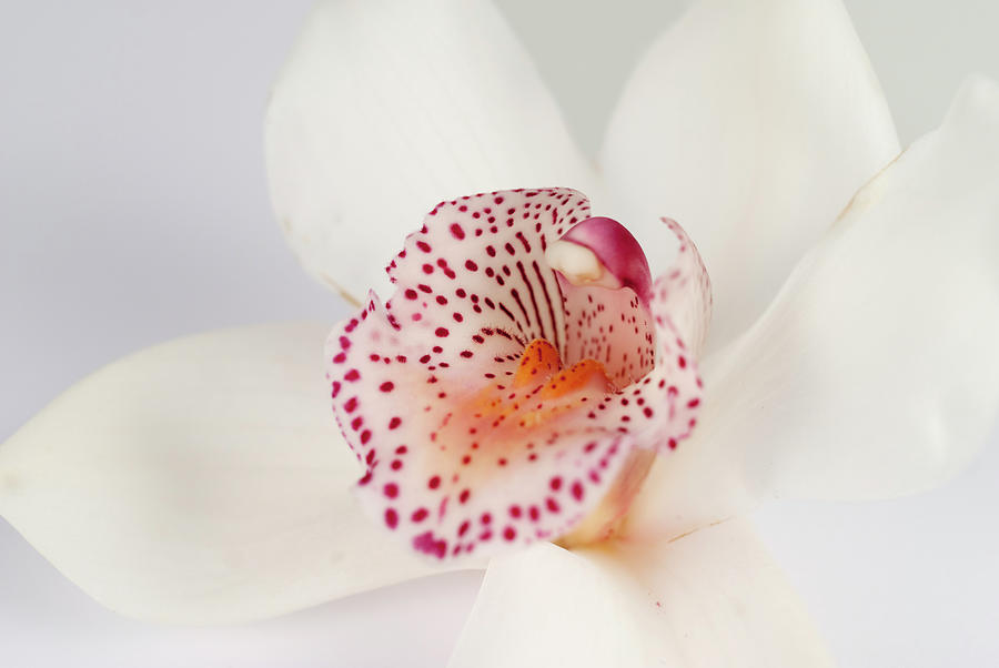 Orchid Photograph by Emilbaiera