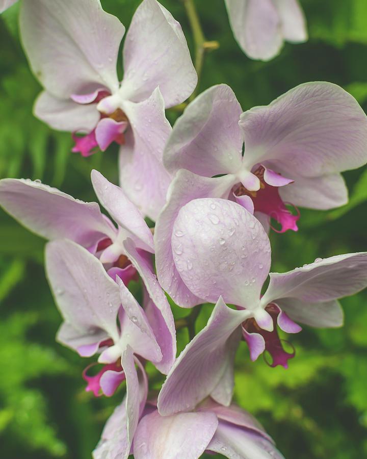Orchid Flower Close up B by Jacek Wojnarowski
