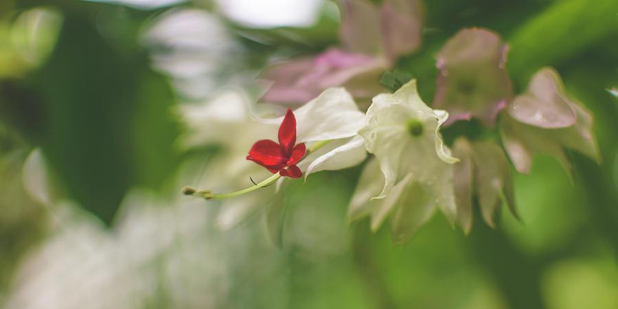 Orchid Flower Close up D by Jacek Wojnarowski