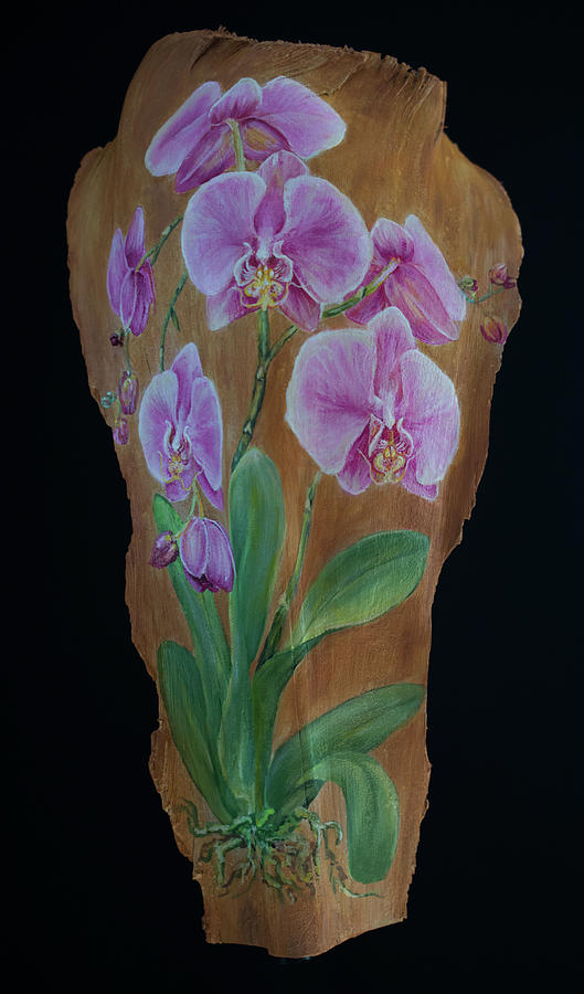 Orchid in pink by Nancy Lauby