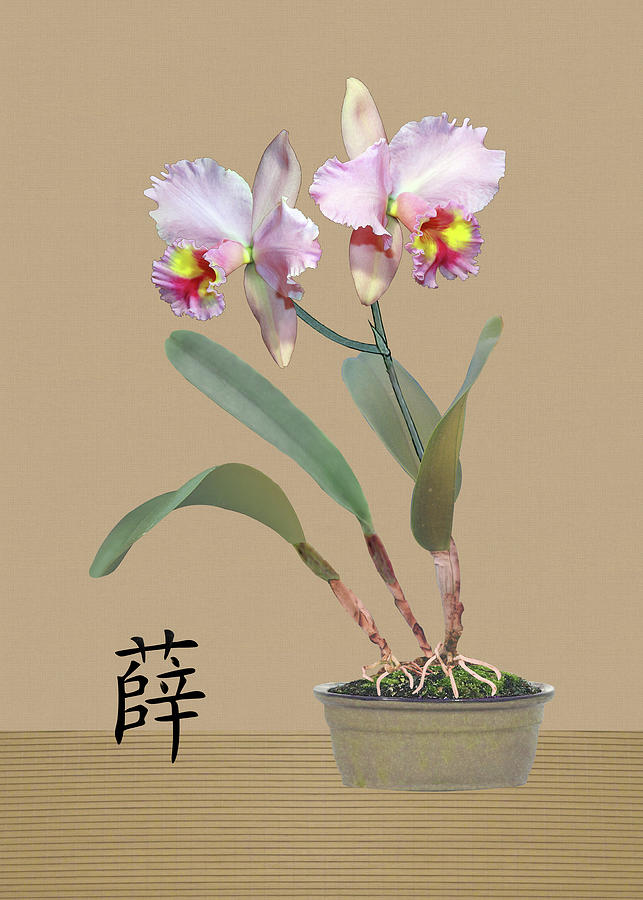 Orchid in Pot by Spadecaller