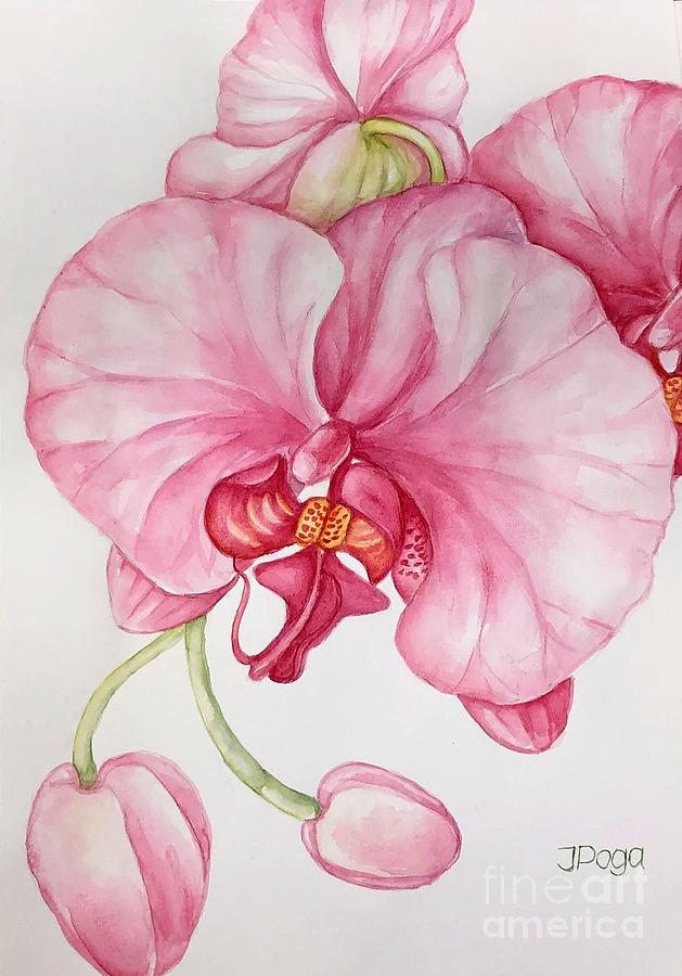 Orchid by Inese Poga
