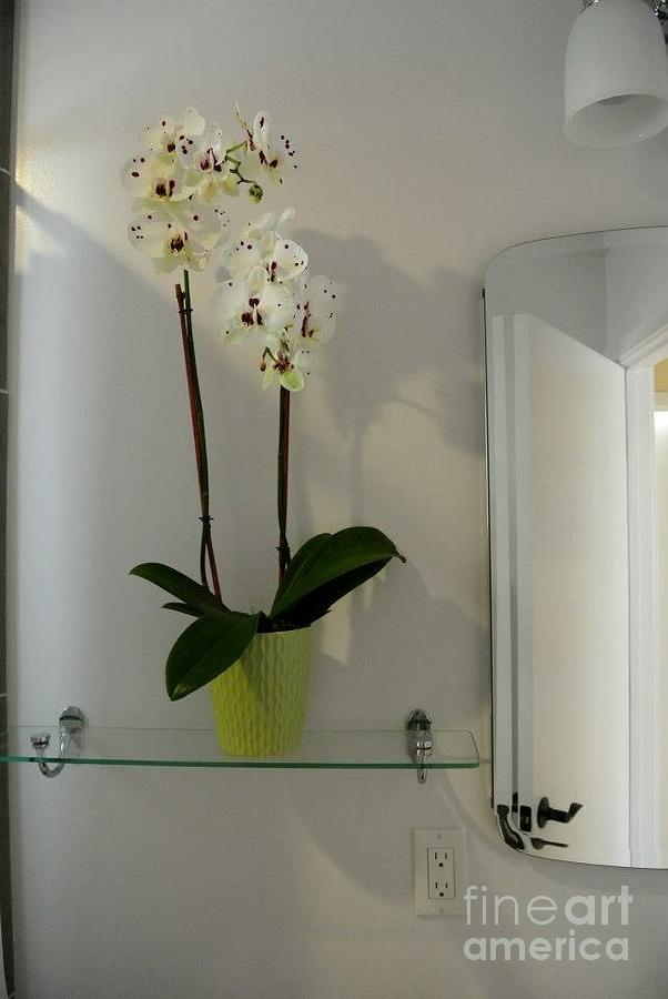 Glass Shelf Photograph - Orchid  by Sharon Green