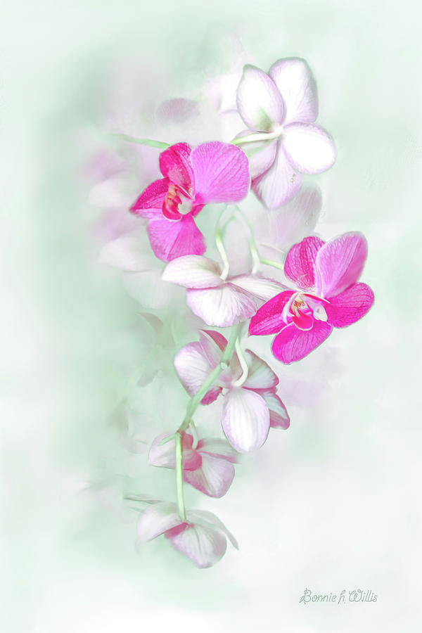 Orchid Show by Bonnie Willis