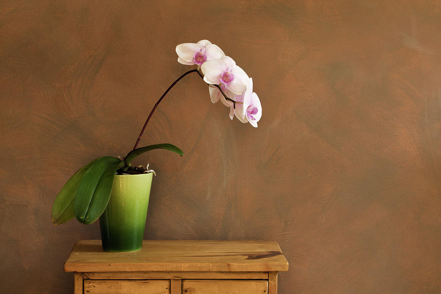 Vase Photograph - Orchid Still Life Hz by Yinyang