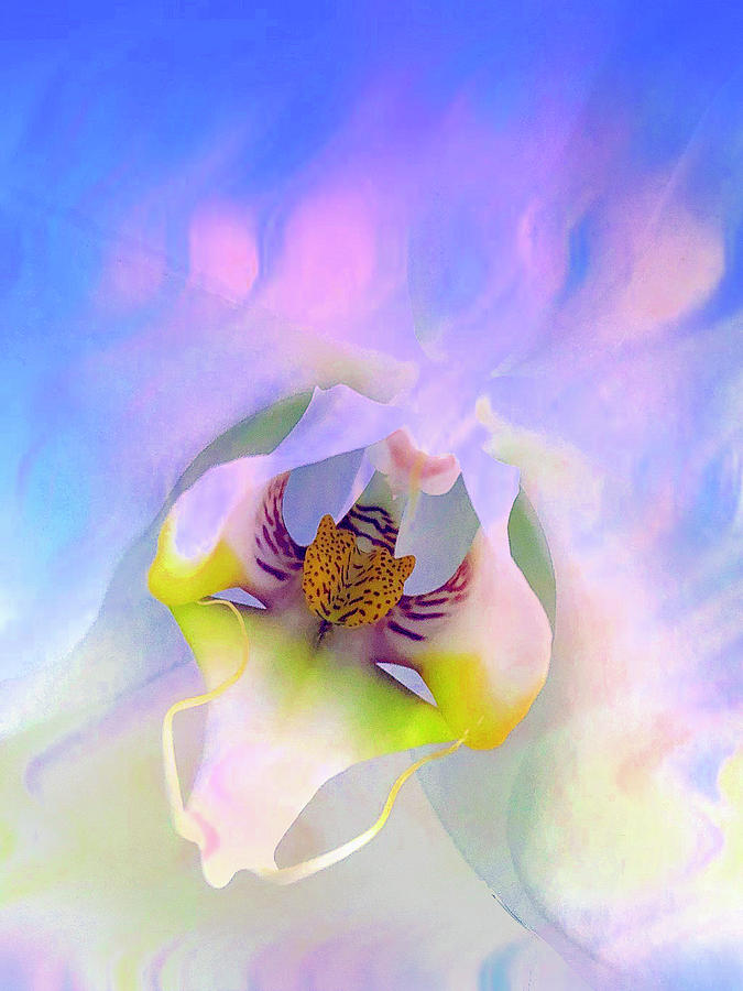 Summer Orchid by Cindy Greenstein