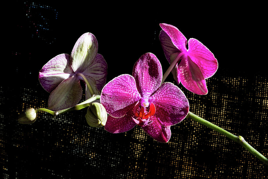 Orchids - 3 by Paul MAURICE