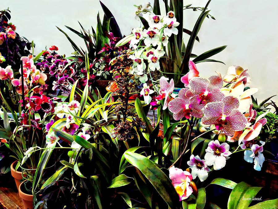 Orchids in the Garden Center by Susan Savad