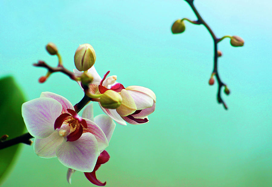 Orchids Out For A Breath Of Fresh Air Photograph by Photo By Alan Shapiro