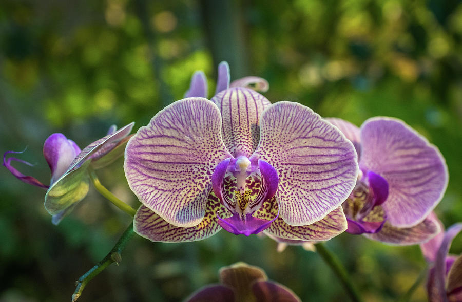 Orchids Up Close by Bill Pevlor