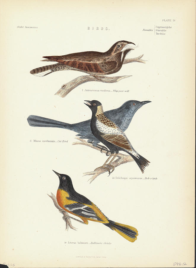 Order Passeriformes Photograph by Kean Collection