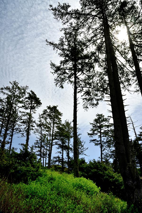 Oregon Coast Forest by Jerry Sodorff