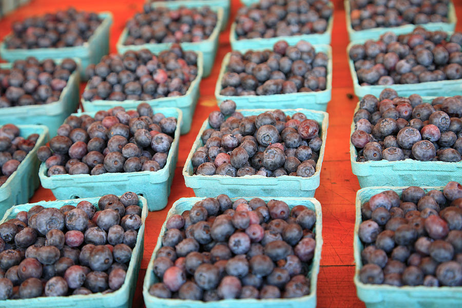 Organic Blueberries Photograph by Wendy Connett