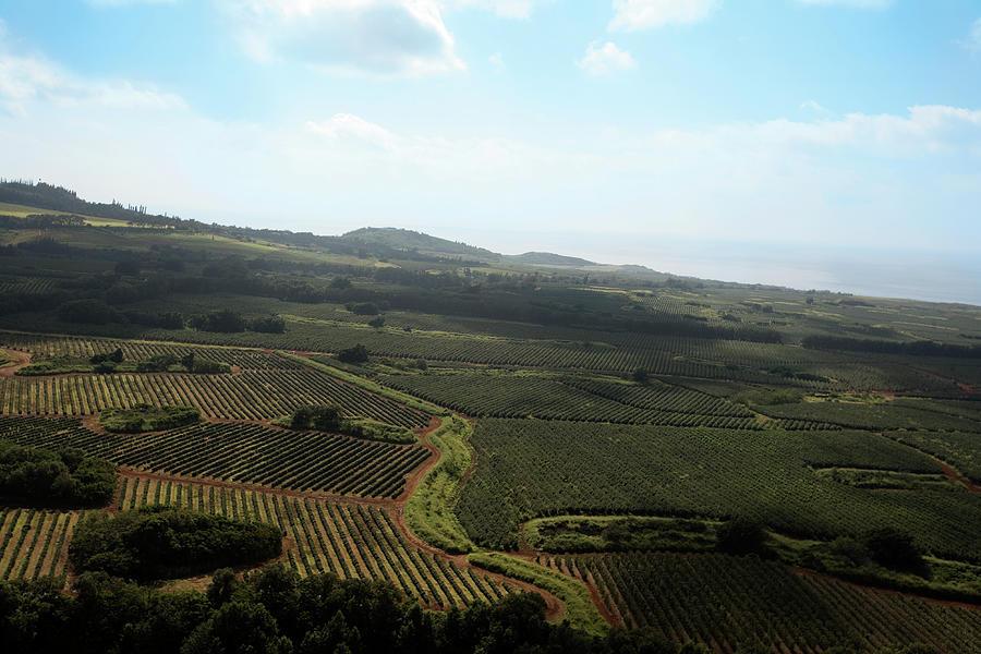 Organic  Plantation Ariel View Photograph by Akurtz