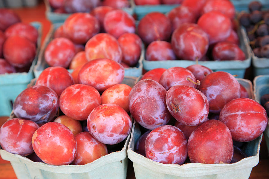Organic Plums Photograph by Wendy Connett