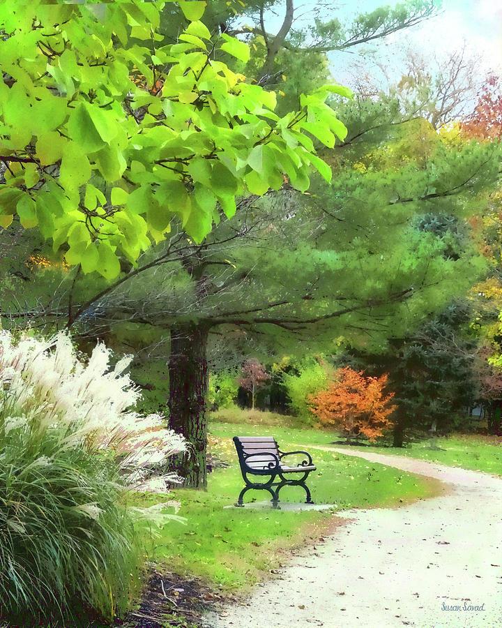 Ornamental Grass in Autumn Park by Susan Savad