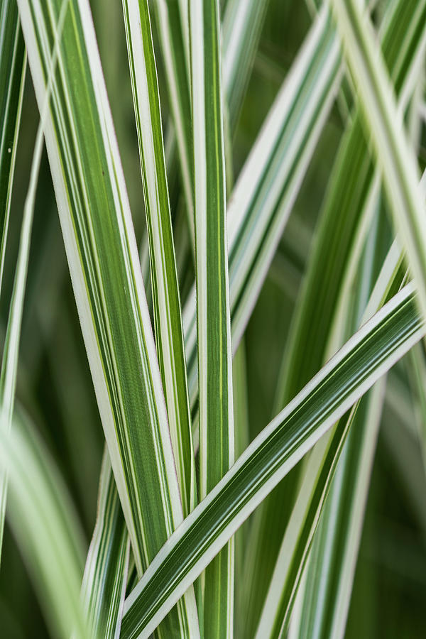Ornamental Grass by Robert Potts