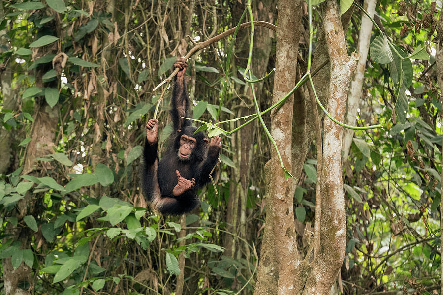Orphan Daphne In Tree Photograph by Gerry Ellis