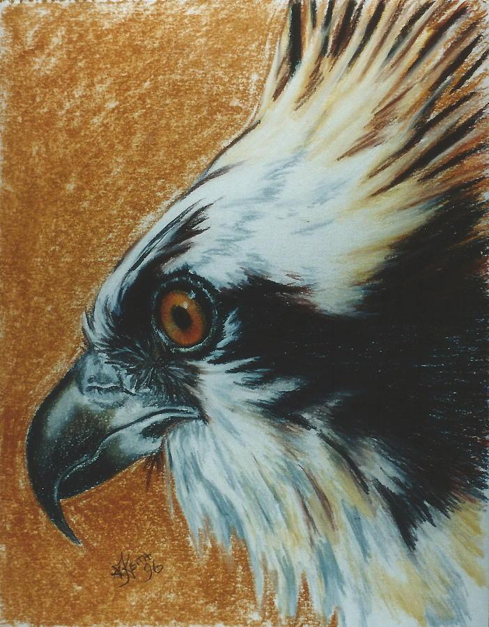 Fish Hawk  by Barbara Keith