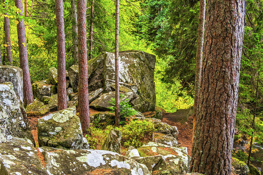 Britain Photograph - Ossians Seat, The Hermitage, Perthshire by David Ross