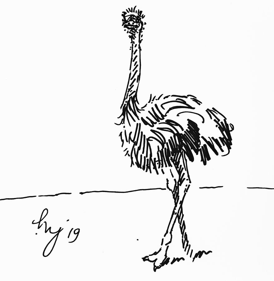 Ostrich drawing by Mike Jory