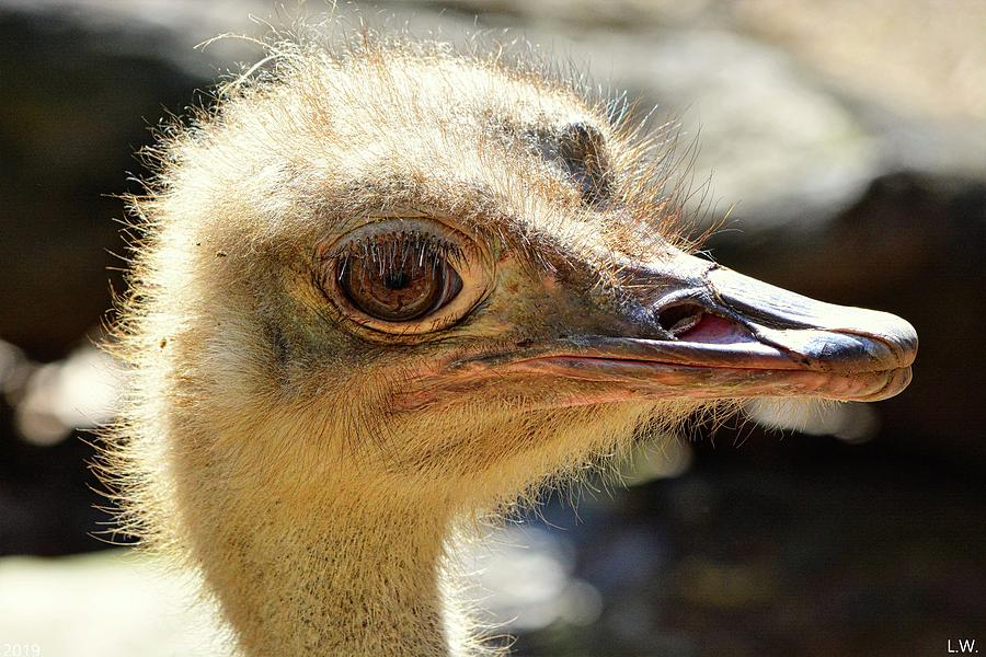 Ostrich Profile by Lisa Wooten