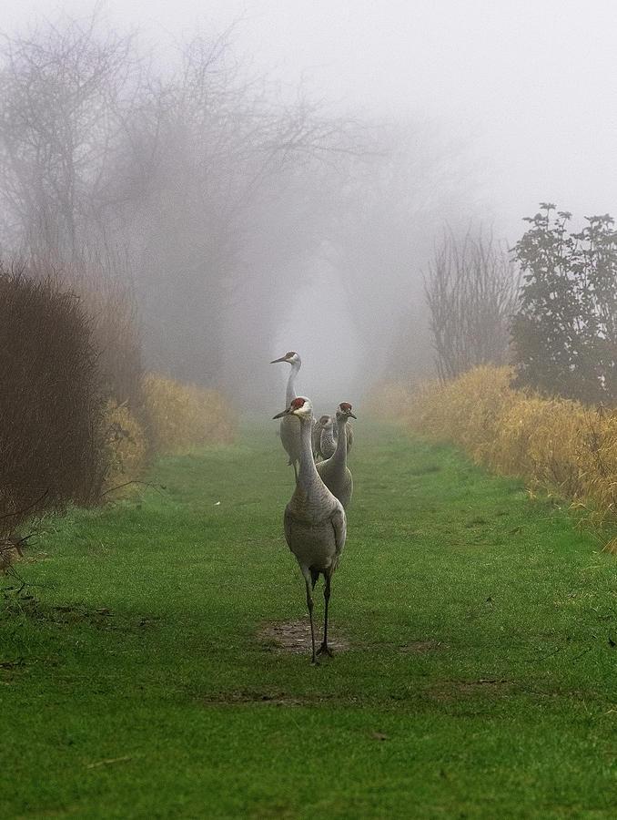 Out of the Mist by Sheldon Bilsker