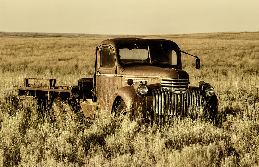 Out to Pasture by Mark Kiver