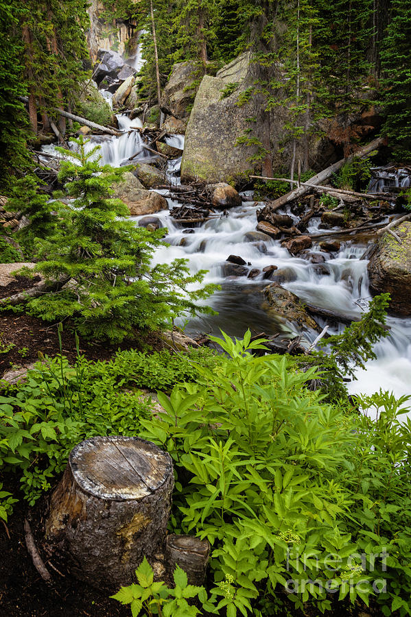 Ouzel Falls in Rocky Mountain National Park by Ronda Kimbrow